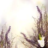 Όμορφα floral σύνορα ανθών Στοκ φωτογραφίες με δικαίωμα ελεύθερης χρήσης