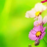 Όμορφα Floral σύνορα Στοκ φωτογραφία με δικαίωμα ελεύθερης χρήσης