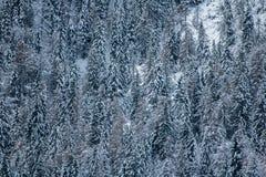 Όμορφα nude δέντρα χειμερινού τοπίου που καλύπτονται με το χιόνι στα ιουλιανά όρη, Σλοβενία Στοκ Εικόνες