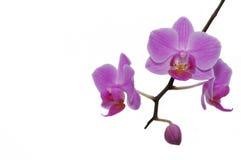 όμορφα orchids τροπικά στοκ εικόνες με δικαίωμα ελεύθερης χρήσης