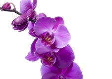 όμορφα orchids Στοκ Φωτογραφία