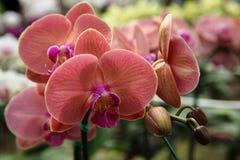 όμορφα orchids Στοκ φωτογραφίες με δικαίωμα ελεύθερης χρήσης