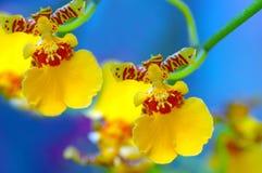 όμορφα orchids στοκ εικόνα με δικαίωμα ελεύθερης χρήσης