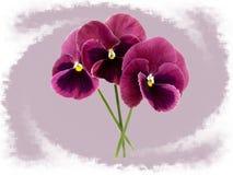 Όμορφα pansy λουλούδια που απομονώνονται στο ανοικτό βιολετί υπόβαθρο στοκ εικόνες