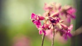 Όμορφα wildflowers στη φύση την άνοιξη Στοκ Φωτογραφία