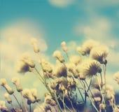 όμορφες άγρια περιοχές λουλουδιών Στοκ φωτογραφία με δικαίωμα ελεύθερης χρήσης