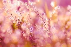 όμορφες άγρια περιοχές λουλουδιών Στοκ Φωτογραφία