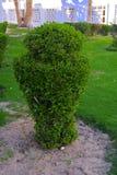 Όμορφες αειθαλείς τροπικές φυτείες στην Αίγυπτο Στην κατηγορία δημιουργικού υποβάθρου των εξωτικών καλοκαιρινών διακοπών στοκ φωτογραφία