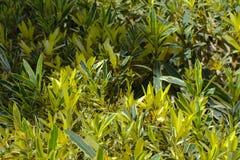 Όμορφες αειθαλείς τροπικές φυτείες στην Αίγυπτο Στην κατηγορία δημιουργικού υποβάθρου των εξωτικών καλοκαιρινών διακοπών στοκ εικόνες με δικαίωμα ελεύθερης χρήσης
