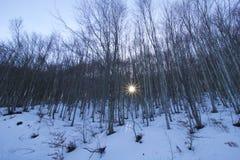 Όμορφες ακτίνες ήλιων μέσω του δάσους δέντρων οξιών το χειμώνα Στοκ εικόνες με δικαίωμα ελεύθερης χρήσης