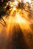 Όμορφες ακτίνες ηλιοβασιλέματος στον κήπο Στοκ εικόνες με δικαίωμα ελεύθερης χρήσης