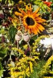 όμορφες ανθοδέσμες από τα λουλούδια και τα χορτάρια στοκ εικόνα