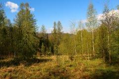 Όμορφες απόψεις των Carpathians βουνών Στοκ φωτογραφία με δικαίωμα ελεύθερης χρήσης