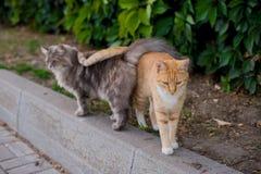 όμορφες γάτες Στοκ φωτογραφία με δικαίωμα ελεύθερης χρήσης