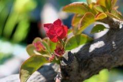 όμορφες εγκαταστάσεις άνοιξη με ένα μικρό ρόδινο λουλούδι στοκ φωτογραφία με δικαίωμα ελεύθερης χρήσης
