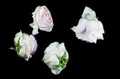 Όμορφες εγκαταστάσεις με τα ευώδη λουλούδια όπως εσωτερικά στοκ εικόνες