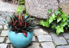 Όμορφες εγκαταστάσεις flowerpot Στοκ Φωτογραφίες