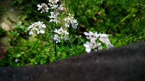 Όμορφες εικόνες φύσης στοκ φωτογραφία με δικαίωμα ελεύθερης χρήσης