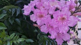 Όμορφες λεπτομέρειες λουλουδιών Στοκ Εικόνες