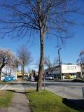 Όμορφες θερινές ημέρες στον Καναδά Βανκούβερ στοκ εικόνες με δικαίωμα ελεύθερης χρήσης