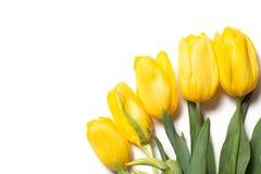 Όμορφες κίτρινες τουλίπες στο ξύλινο υπόβαθρο Στοκ Φωτογραφία