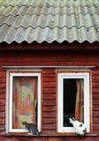 Όμορφες και χαρούμενες γάτες Στοκ Φωτογραφία