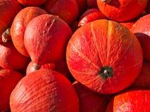 Όμορφες κόκκινες κολοκύθες που συσσωρεύονται σε έναν σωρό στοκ εικόνα με δικαίωμα ελεύθερης χρήσης