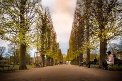Όμορφες κύριες γραμμές με τα δέντρα και την οδική πορεία Στοκ Φωτογραφίες