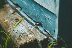 Όμορφες μέλισσες σε μια κυψέλη Στοκ φωτογραφίες με δικαίωμα ελεύθερης χρήσης