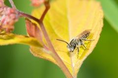 Όμορφες μύγες φορεμάτων Στοκ φωτογραφία με δικαίωμα ελεύθερης χρήσης