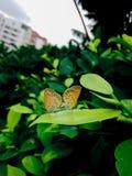 όμορφες πεταλούδες δύο Στοκ φωτογραφία με δικαίωμα ελεύθερης χρήσης