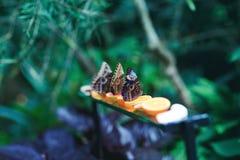 Όμορφες πεταλούδες που τρώνε το λεμόνι στον πίνακα κήπων Στοκ φωτογραφίες με δικαίωμα ελεύθερης χρήσης
