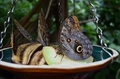 Όμορφες πεταλούδες Στοκ Εικόνα