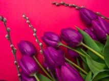 Όμορφες πορφυρές τουλίπες, ιτιά - κλείστε αυξημένος στοκ φωτογραφίες