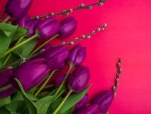 Όμορφες πορφυρές τουλίπες, ιτιά - κλείστε αυξημένος στοκ εικόνα