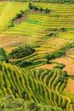Όμορφες πράσινες σειρές πεζουλιών ρυζιού Στοκ Φωτογραφίες