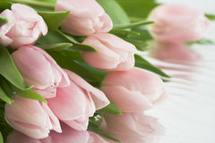 Όμορφες ρόδινες τουλίπες Στοκ εικόνες με δικαίωμα ελεύθερης χρήσης