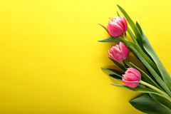 Όμορφες ρόδινες τουλίπες στην κίτρινη ανασκόπηση Στοκ Εικόνα