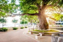 Όμορφες σκηνές και θέες σε μια μικρή παραλιακή πόλη Mlini, δίπλα σε Dubrovnik Παλαιό planetree στο ηλιοβασίλεμα στοκ φωτογραφίες με δικαίωμα ελεύθερης χρήσης