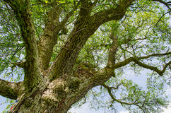 Όμορφες στιγμές κάτω από το δέντρο στον τομέα Στοκ Εικόνες