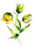 όμορφες τουλίπες λουλουδιών Στοκ φωτογραφίες με δικαίωμα ελεύθερης χρήσης