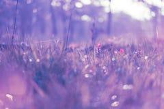 Όμορφες τουλίπες του Σιάμ Στοκ Εικόνα
