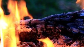 Όμορφες φλόγες πυρκαγιάς στη φύση απόθεμα βίντεο