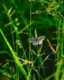 Όμορφη άγρια ζωηρόχρωμη πεταλούδα που στηρίζεται στον κήπο στοκ εικόνα με δικαίωμα ελεύθερης χρήσης