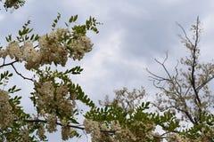 Όμορφη άνθηση λουλουδιών Στοκ φωτογραφίες με δικαίωμα ελεύθερης χρήσης