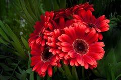 όμορφη άνοιξη λουλουδιώ&nu Στοκ Εικόνες