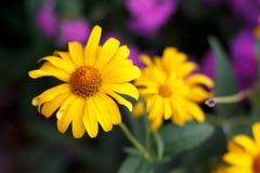 όμορφη άνοιξη λουλουδιών Στοκ Εικόνες