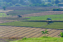 Καλλιεργήσιμο έδαφος, Ταϊλάνδη Στοκ Εικόνες
