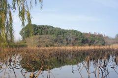 Όμορφη άποψη με την κίτρινη ιτιά το ηλιόλουστο απόγευμα στοκ φωτογραφία με δικαίωμα ελεύθερης χρήσης
