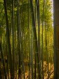 Όμορφη άποψη στο δάσος μπαμπού σε Arashiyama, Κιότο, Ιαπωνία Στοκ φωτογραφία με δικαίωμα ελεύθερης χρήσης